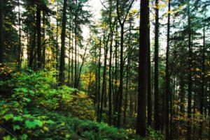trees-251923_1920